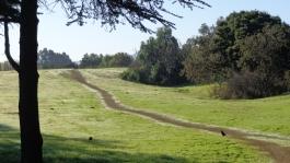 uphill-gunn